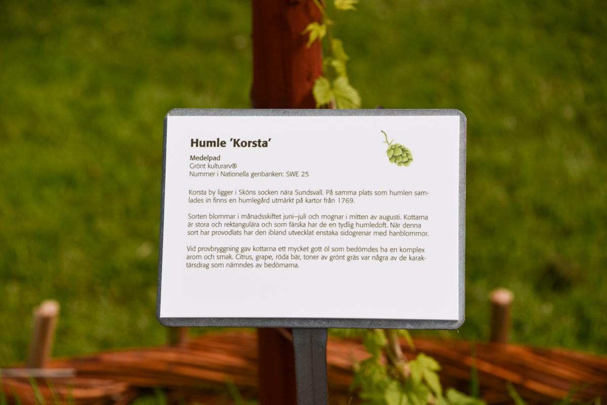 Till varje planta finns en skylt som berättar om bakgrunden och i de flesta fall även om egenskaperna när humlen används i öl.
